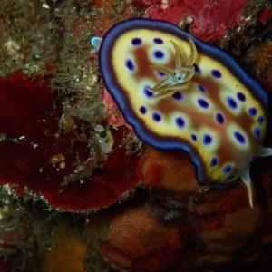 ashgp club de plongee paris 19 voyage indonesie 2019 26