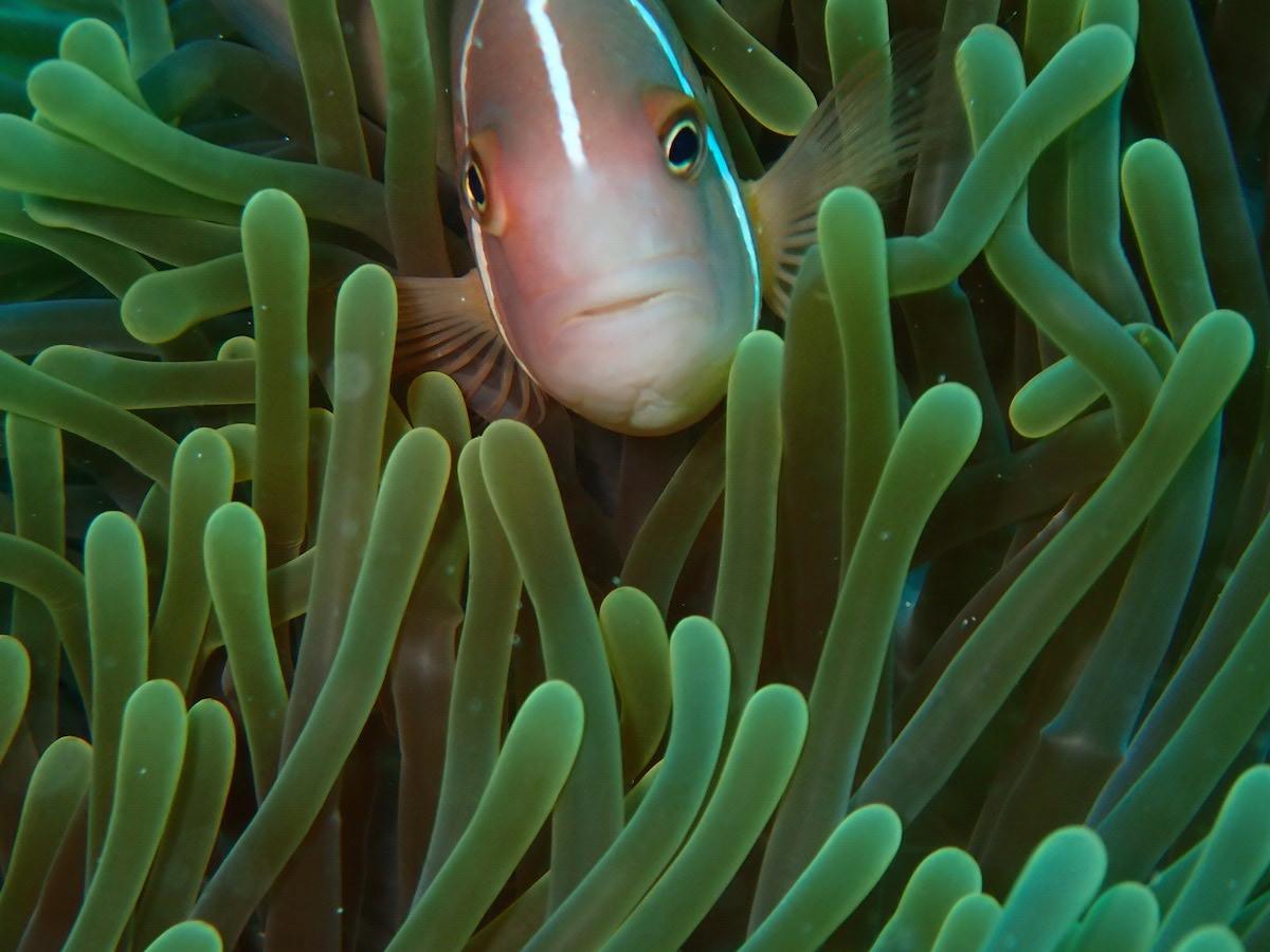 ashgp club de plongee paris 19 voyage indonesie 2019 8