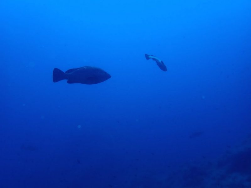 ashgp club de plongee paris 19 voyage lavandou 2019 10