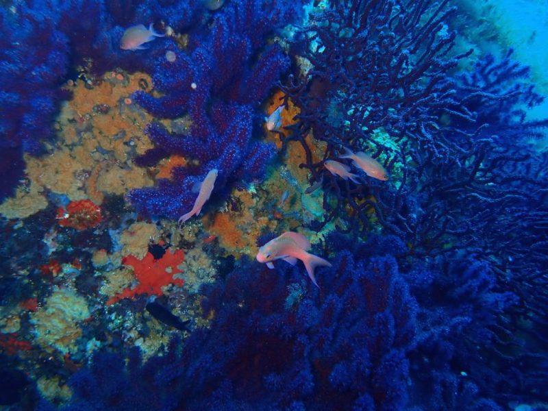 ashgp club de plongee paris 19 voyage lavandou 2019 25