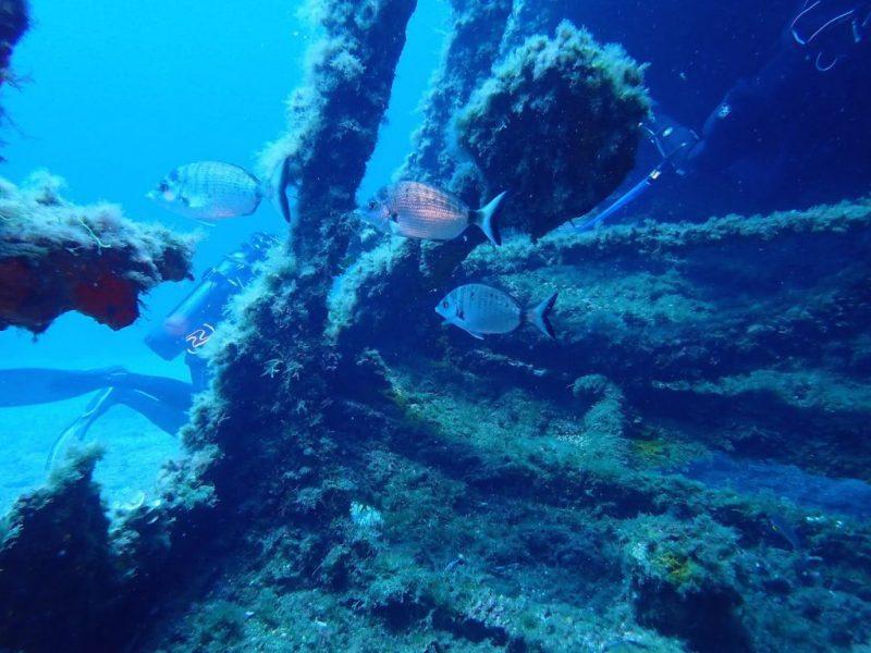 ashgp club de plongee paris 19 voyage lavandou 2019 35