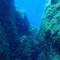 ashgp club de plongee paris 19 voyage lavandou 2019 41